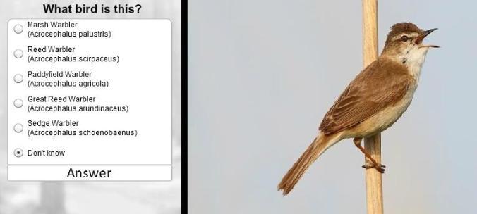 BirdID